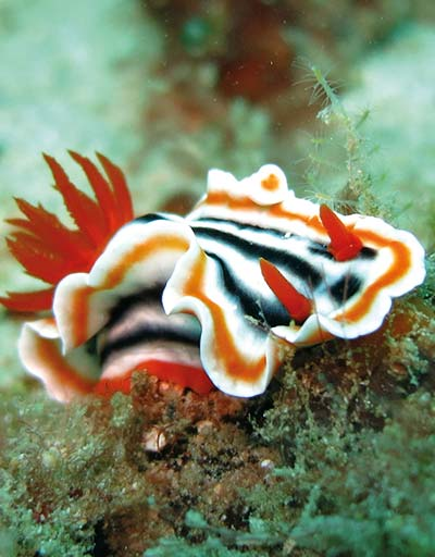 About Nudi Divers